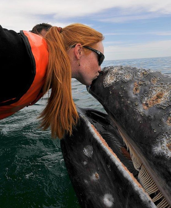 It's good to have a grey whale as a friend....